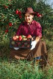 Man garden collect ripe apples hat green red proprietor worker owner harvest box basket. Young happy man in the garden collect ripe apples. A worker in the royalty free stock photo