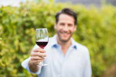 Young happy man smiling at camera and holding a glass of wine. In the grape fields Royalty Free Stock Photo
