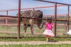 Young happy smiling child girls feeding emu ostrich on bird farm Royalty Free Stock Image