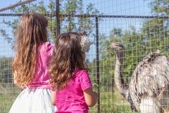 Young happy smiling child girls feeding emu ostrich on bird farm Royalty Free Stock Photography