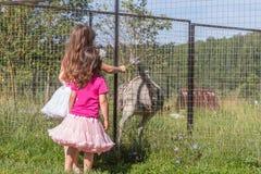 Young happy smiling child girls feeding emu ostrich on bird farm Royalty Free Stock Photos