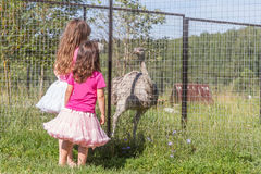 Young happy smiling child girls feeding emu ostrich on bird farm Royalty Free Stock Photography