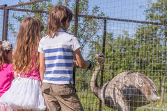 Young happy smiling kids feeding emu ostrich on bird farm Royalty Free Stock Photography