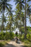 Young happy tourist woman with hat riding scooter motorbike in tropical paradise jungle  with blue sky and palm trees exploring tr. Back view of young happy Stock Photography