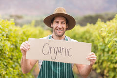 Young happy vintner holding an sign Royalty Free Stock Photos