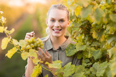 Young happy vintner picking grapes Royalty Free Stock Photography