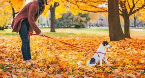 Young woman with dog outdoors in autumn Stock Photo