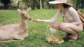 Young happy woman feeding little deer in zoo during travel in national park Royalty Free Stock Image