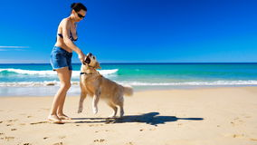 Young happy woman playing with Golden Retriever dog on the beach. Sunny day stock video footage
