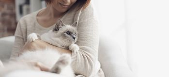 Woman petting her beautiful cat at home royalty free stock image