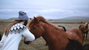 Young happy woman stroking and feeding brown Icelandic horse with bread. Traveling female walking in farm with animals.