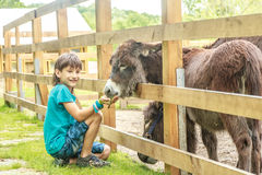 Young happy young boy feeding donkey on far Stock Photo
