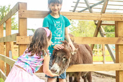 Young happy young girl and boy feeding donkey Stock Photos