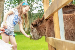 Young happy young girl feeding donkey on far Stock Photography