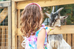 Young happy young girl feeding goat on farm Royalty Free Stock Photography