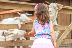 Young happy young girl feeding goat on farm Royalty Free Stock Photos