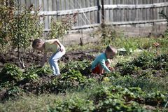 The young harvesters. Little boy and girl working in the garden Stock Photography