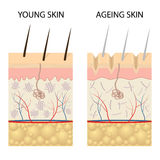 Young healthy skin and older skin comparison. Royalty Free Stock Photos