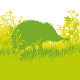 Young hedgehog in the undergrowth. Young hedgehog in the green undergrowth Royalty Free Stock Image
