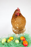 Young Hen with painted Eggs Royalty Free Stock Images