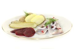 Young herring fillet Stock Images