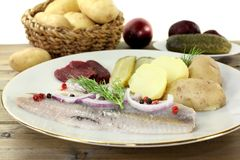 Young herring fillet Stock Photos