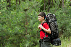 Young hiker. In pine forest Stock Image