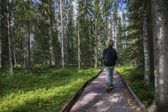 Young Hiker in Finish Lapland Royalty Free Stock Photography