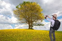 Young hiker lady taking a cellphone picture of a beautiful tree Royalty Free Stock Images
