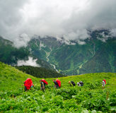 Young hikers trekking in Svaneti. Georgia Royalty Free Stock Photography
