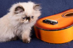 Young Himalayan Persian kitten with a guitar. A young, two month old Blue Point Himalayan Persian kitten with a miniature guitar on a blue background stock images