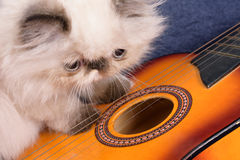 Young Himalayan Persian kitten with a guitar. A young, two month old Blue Point Himalayan Persian kitten with a miniature guitar on a blue background stock image