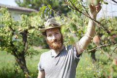 Young hipster bearded boy farmer who gathers peaches from the orchard Royalty Free Stock Images