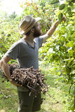 Young hipster bearded  boy farmer working on vineyard with bundle of branches Royalty Free Stock Photo