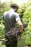 Young hipster bearded  boy farmer working on vineyard with a bundle of branches Stock Photo