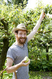 Young hipster bearded smiling boy farmer who gathers pears from trees with straw hat Stock Photography