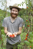 Young hipster bearded smiling boy farmer who gathers tomatoes from cherry tomatoes plants Stock Photos