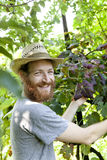 Young hipster bearded smiling boy farmer working on vineyard Royalty Free Stock Images