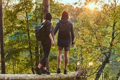 Young hipster couple holding hands standing on a tree trunk in a beautiful forest at sunset. Travel, tourism, and hike royalty free stock photos