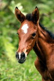 Young Horse. A few day old foal Royalty Free Stock Photos