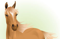 Young horse. Royalty Free Stock Photos