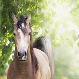 Young horse on background of foliage Stock Photos