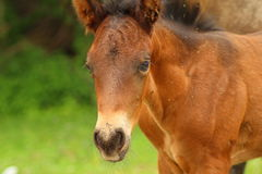 Young horse. In the east of Romania Stock Photos