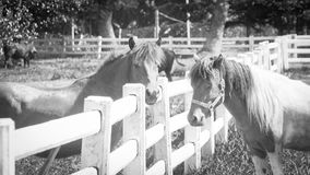 Young horse in a fenced Royalty Free Stock Images