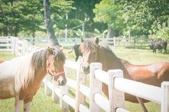 Young horse in a fenced Royalty Free Stock Photo
