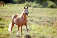 Young horse in field Stock Photos