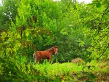 Young horse grazes in the forest in summer royalty free stock photo