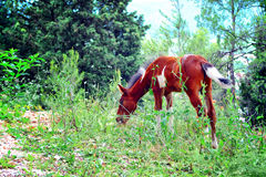 Young horse grazing in the forest Stock Photo