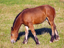 Young horse grazing on meadow Stock Photo