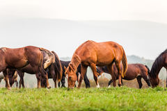 Young horse grazing in a meadow in autumn Royalty Free Stock Photo